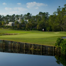 Saddlebrook Golf Resort